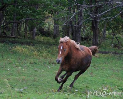 horse904