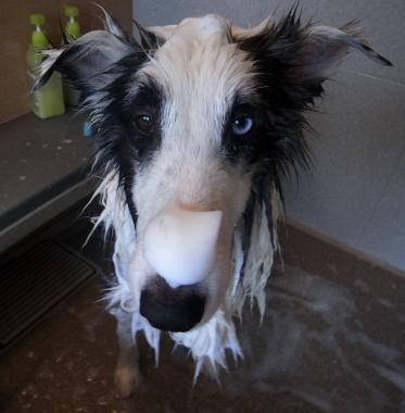 shampoo825