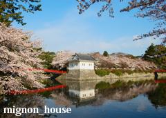 春 - 小田原城址公園の桜