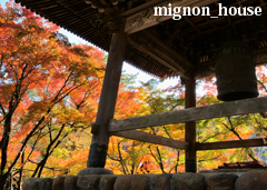 秋 - 修善寺境内の紅葉