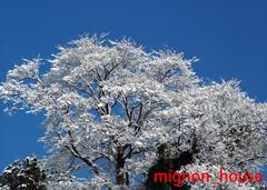 フォトムービー作成館 - 雪の華