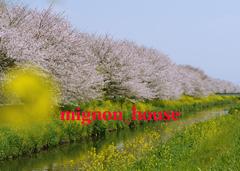 フォトムービー作成館 - 春爛漫