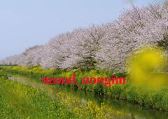 フォトムービー作成館 - 春爛漫(ミラー)