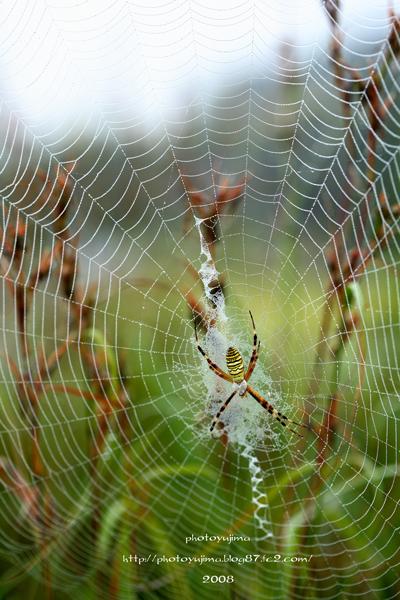 蜘蛛の巣2