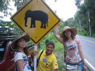 プーケット タイ 観光ツアー ダイビング シミラン