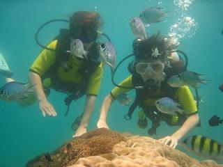 プーケット 体験ダイビング タイ コーラル島