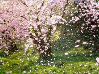 もうすぐ春がやってくるという・・・