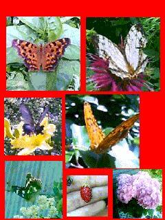 沢山、蝶もよってくるんだよね♪