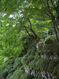 IMGP0057taima.garden.jpg