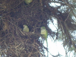 IMGP0234parrot.nest3.jpg
