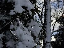 IMGP0580fresh.cream-like.snow.jpg
