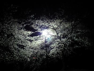 桜の花びら 踏んで歩いた。君と肩組んで熱くこみあげた。春よ春に春は春の春は遠く。。。
