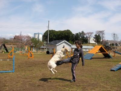 パティちゃんの足飛び。高い跳躍だわ。