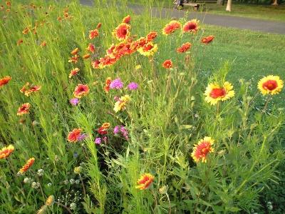 雑草の花壇の花