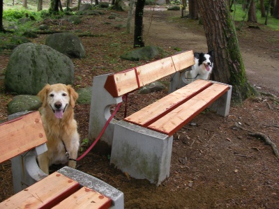 ベンチのあっちとこっち