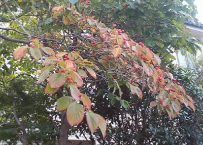 知らぬ間に秋が