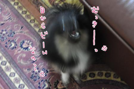 DSC_0971_convert_20101209095921.jpg