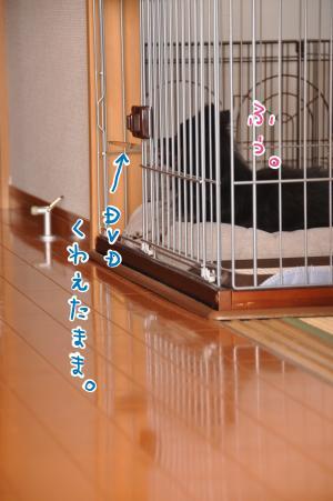 DSC_1185_convert_20101220214731.jpg