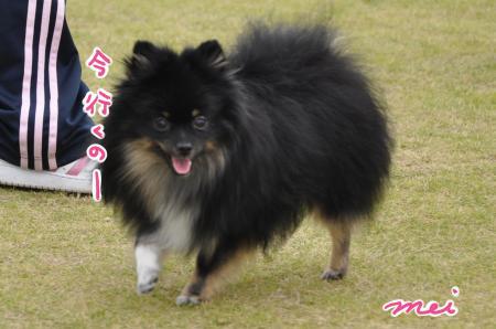 DSC_1612_convert_20111118083526.jpg
