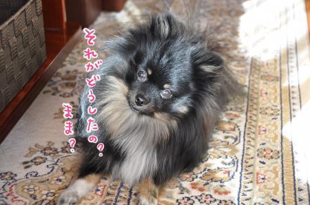 DSC_1892_convert_20111220102246.jpg