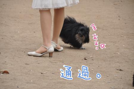 DSC_5387_convert_20110808174011.jpg