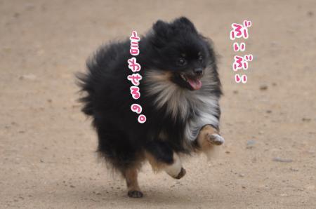 DSC_5411_convert_20110808174147.jpg