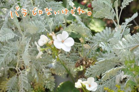 DSC_6291_convert_20110711111124.jpg