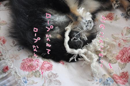 DSC_7848_convert_20100916222106.jpg
