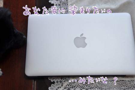 DSC_8303_convert_20110804143302.jpg