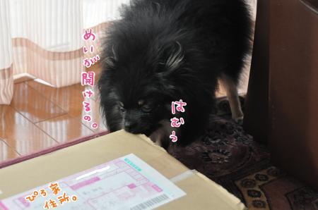 DSC_8995_convert_20101020082653.jpg