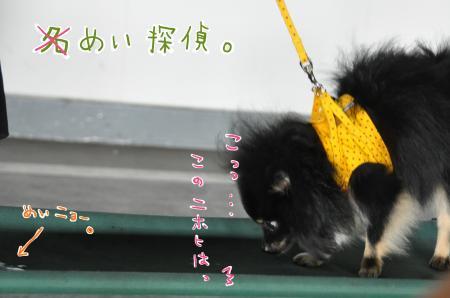 a1-2_convert_20100920092027.jpg