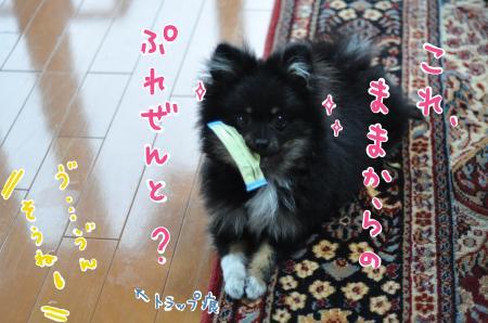 bisco_convert_20100519085400.jpg