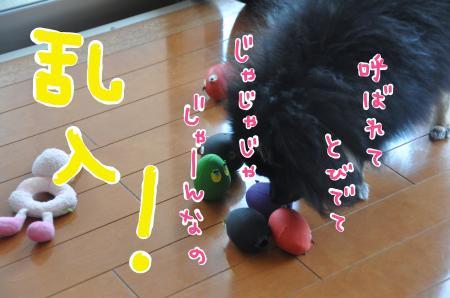 daimao-_convert_20100723123516.jpg
