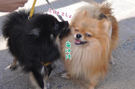 danmei_convert_20101105134028.jpg