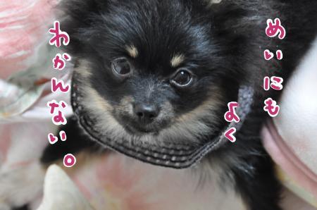 fumei_convert_20100421093828.jpg