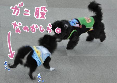 gani_convert_20100331210338.jpg