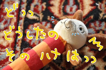 hanaha_convert_20100730084450.jpg