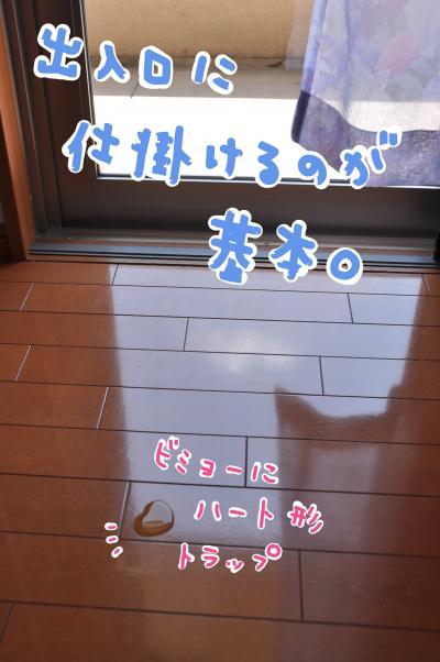 heart_convert_20100510090627.jpg