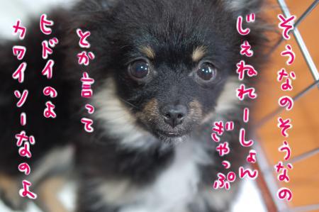 hidoi_convert_20100324120100.jpg