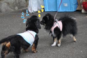 hisohiso_convert_20100614094916.jpg