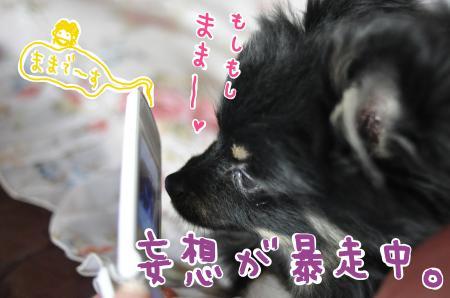 mamatel_convert_20100528165133.jpg