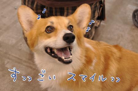 meidaiya2_convert_20101012092646.jpg