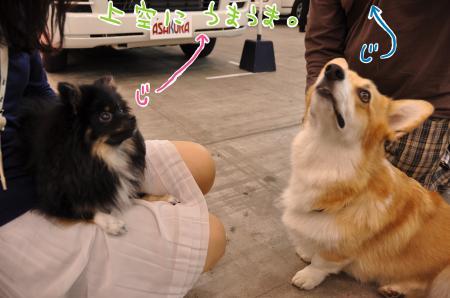 meidaiya_convert_20101012092612.jpg