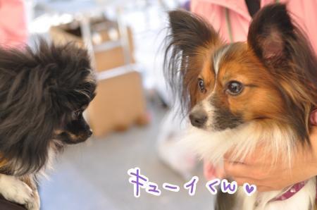 meikyui_convert_20101104114726.jpg