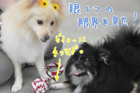 merimei_convert_20100710080247.jpg