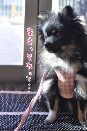 nengaga_convert_20101231223119.jpg