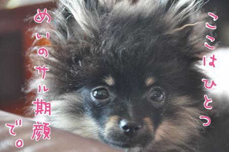 sarusaru_convert_20100711184500.jpg