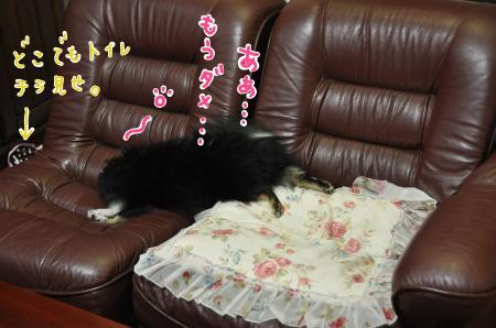 sofa_convert_20100625220755.jpg