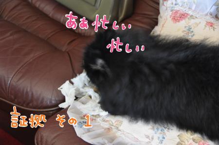 syoko1_convert_20100806112644.jpg