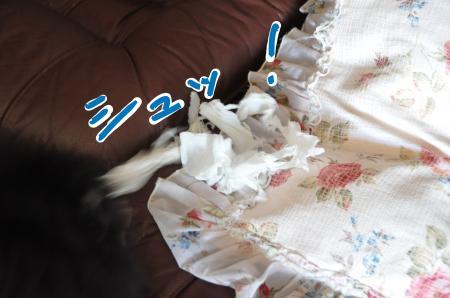 syu_convert_20100806112740.jpg